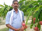 पैसों की कमी के चलते पढ़ाई छोड़नी पड़ी; फिर कैंसर हुआ तो कर्ज लेना पड़ा, अब ड्रैगन फ्रूट और सब्जियों की खेती से 10 लाख का बिजनेस|ओरिजिनल,DB Original - Dainik Bhaskar