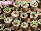 रेगिस्तान में ही नहीं, घरों के गमलों में भी उग सकते हैं कैक्टस, जानिए ऐसी वैराइटीज|गार्डनिंग,Gardening - Dainik Bhaskar