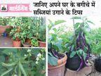 बिना किसी खास मेहनत के अपने घर के बगीचे में उगाइए ये सब्जियां, बनाइए पकौड़ी से लेकर चटनी तक गार्डनिंग,Gardening - Dainik Bhaskar