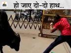 बीच सड़क पर जान पर खेललाल टीशर्टपहने युवक करने लगा दो-दो हाथ, आखिर सांड को हटना पड़ा पीछे|मध्य प्रदेश,Madhya Pradesh - Dainik Bhaskar