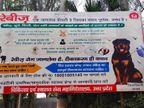 स्वास्थ्य विभाग ने रैबीज के प्रति जागरुकता के लिए लगवाई होर्डिंग; डॉगी की फोटो के नीचे लिखा DM उन्नाव|कानपुर,Kanpur - Dainik Bhaskar