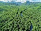 भारत से दोगुने बड़े जंगल को मार्केट में बदल रहा रूस, पेड़ों का संरक्षण करने और बदले में कार्बन क्रेडिट कमाने कंपनियों को किराए पर देगा|विदेश,International - Dainik Bhaskar