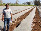 पिता की तबीयत खराब हुई तो इंजीनियरिंग की पढ़ाई छोड़नी पड़ी, अब खीरे की खेती से लाखों कमा रहे|ओरिजिनल,DB Original - Dainik Bhaskar