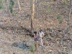 बरगी-घुंसौर रोड के जंगल में मिली अधजली लाश, पहचान नहीं|जबलपुर,Jabalpur - Dainik Bhaskar