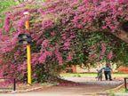 साइकिल ट्रैक पर फूलों का राज; दिन का तापमान34 पार, 31 को मौसम बदलने के आसार|चंडीगढ़,Chandigarh - Dainik Bhaskar