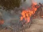 आग की चपेट में आने से आठ घर जले, कई भैंस व बकरियों की मौत, सूचना के बाद भी मौके पर नहीं पहुंचा प्रशासन|मुरैना,Morena - Dainik Bhaskar