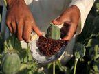 छह सौ ग्राम अफीम का दूध जब्त, युवक गिरफ्तार|जोधपुर,Jodhpur - Dainik Bhaskar