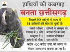 सरगुजा के जंगल में मिला हाथी के बच्चे का शव, शरीर पर जख्मों के निशान और दोनों दांत गायब; अफसर बोले- खाई में गिरकर मरा छत्तीसगढ़,Chhattisgarh - Dainik Bhaskar