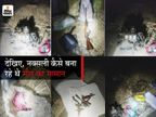 सामने आई नक्सलियों की बड़ी साजिश, हैंड ग्रेनेड बनाकर जमा कर रहे थे हथियारों का जखीरा|बिहार,Bihar - Dainik Bhaskar