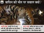 जलते हुए जंगल में मिला बाघिन का शव; प्रबंधन ने 2 दिन घटना छुपाई, बाद में कहा- बाघ से लड़ाई में गई जान|जबलपुर,Jabalpur - Dainik Bhaskar