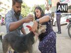 हैदराबाद का एनजीओ आवारा कुत्तों के लिए फ्लोरेसेंट कॉलर बनाकर दे रहा महिलाओं को रोजगार, ड्राइविंग के दौरान इन्हें मरते हुए देखकर शुरू किया ये काम|लाइफस्टाइल,Lifestyle - Dainik Bhaskar