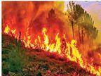 हिमालय में ब्लैक कार्बन की मात्रा बढ़ी, इससे फिर आपदा का संकट; स्नो लाइन घट रही, जीव-जंतुओं और वनस्पतियों पर पड़ेगा सीधा असर|देश,National - Dainik Bhaskar