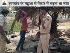 झारखंड से बिहार आता था महुआ, जयगीर के जंगल में रोज बनता था 15 हजार लीटर दारू, 300 गांवों में होती थी सप्लाई|बिहार,Bihar - Dainik Bhaskar