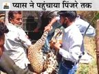 गांव वालों ने घरों में बंद होकर बचाई जान, 2 घंटे की मशक्कत के बाद वन विभाग की टीम ने किया ट्रेंकुलाइज|उदयपुर,Udaipur - Dainik Bhaskar