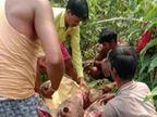 उदंती सेंचुरी में जंगली सुअर का शिकार करने वालों पर 4 दिन बाद भी कोई कार्रवाई नहीं; एक को पकड़ा, तो ग्रामीणों को सौंप दिया|छत्तीसगढ़,Chhattisgarh - Dainik Bhaskar