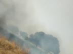 खेतों पर से निकले बिजली तारों से निकली चिंगारी से गेहूं की खड़ी फसल जलकर हो गई खाक|भिंड,Bhind - Dainik Bhaskar