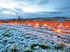 फ्रांस में ठंड रोधी मोम के अलावसे अपनी फसल को पाले से बचा रहे किसान, 6 लीटर की होती है एक मोमबत्ती|विदेश,International - Dainik Bhaskar