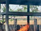24 घंटे में कोरोना से जिले के अंदर कोई मौत नहीं, असलियत; कोविड प्रोटोकाल से जले 7 शव, इनमें 3 मृतक रोहतक के थे|रोहतक,Rohtak - Dainik Bhaskar