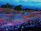 अमेरिका की आर्टिफिशियल वादियां, 58 हजार सोलर बल्बों से रोशन 15 एकड़ की पहाड़ी|विदेश,International - Dainik Bhaskar