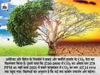 पर्यावरण में 300 साल की तुलना में 50% ज्यादा बढ़ी कार्बन डाइऑक्साइड, इसकी 25% मात्रा बढ़ने में 200 साल लगे थे|विदेश,International - Dainik Bhaskar