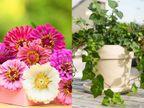 महामारी के बीच घर में लगाएं हवा शुद्ध करने वाला गरबेरा डेजी और पोथोस का पौधा, आसानी से लगने वाले इंगलिश आइवी से बढ़ाएं घर की शान|लाइफस्टाइल,Lifestyle - Dainik Bhaskar