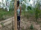 घर से 100 मीटर की दूरी पर जंगल में पेड़ से लटकी मिली लाश, सुसाइड के कारणों की तलाश में जुटी पुलिस|बालोद,Balod - Dainik Bhaskar