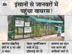 हैदराबाद के जू में कोरोना के लक्षण दिखने के बाद हुआ शेरों का RT-PCR, सर्दी-खांसी के साथ भूख भी घटी|देश,National - Dainik Bhaskar
