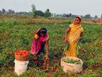 फसल की लागत भी नहीं मिल पाने से किसान परेशान, छोटे व्यापारी सस्ते में खरीद बेच रहे महंगे दाम पर सब्जी|झारखंड,Jharkhand - Dainik Bhaskar