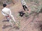 बदरवास की महिला का शव झाड़ियों में मिला, ब्यूटी पार्लर का सामान लेने आई थी|गुना,Guna - Dainik Bhaskar