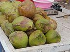 नारियल में उछाल, हर दिन बिक रहे आठ से दस हजार नारियल, प्रति नग बीस से तीस रुपए बढ़े श्रीगंंगानगर,Sriganganagar - Dainik Bhaskar