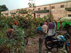 रीवा-सतना में बिजली गिरने से दो बच्चों समेत 4 की मौत, बारिश के समय ज्यातार लोग पेड़ के नीचे खड़े थे|रीवा,Rewa - Dainik Bhaskar