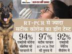 कोरोना वायरस से संक्रमित मरीजों को सूंघकर पहचान लेते हैं स्निफर डॉग, 97% है एक्यूरेसी रेट|ज़रुरत की खबर,Zaroorat ki Khabar - Dainik Bhaskar