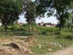 सेक्टर-25 वेस्ट में जमीन निकली फॉरेस्ट लैंड; सेक्टर-25 की एक एकड़ फॉरेस्ट लैंड की एवज में कैंबवाला में एक एकड़ जमीन फॉरेस्ट डिपार्टमेंट को ट्रांसफर करेगा MC|चंडीगढ़,Chandigarh - Dainik Bhaskar