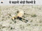 'चांदा' के लिए गांव में नहीं घुसते थे गजराज, फिर एक दिन हाथियों ने गद्दारी कर घोड़े को ही मार डाला|छत्तीसगढ़,Chhattisgarh - Dainik Bhaskar