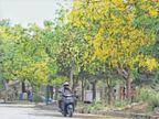 रात की आंधी से दिन में राहत, 50 कम 380 रहा पारा; तीन जून तक छाएंगे आंशिक बादल|जालंधर,Jalandhar - Dainik Bhaskar