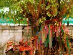 अपरा एकादशी पर पीपल पूजा की भी परंपरा, इसी पेड़ से जुड़ी है इस व्रत की कथा|धर्म,Dharm - Dainik Bhaskar