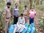 नाहन में 81 किलोग्राम गांजा साथ आरोपी गिरफ्तार, 1 सप्ताह में पकड़ा जा चुका है करीब 3 करोड़ का नशा|हिमाचल,Himachal - Dainik Bhaskar