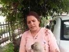 कुत्ते के 6 बच्चों पर डाला मिर्ची पाउडर, क्यारियों में घुसने से गुस्साई महिला ने की हरकत, चिल्लाहट सुनी तो लोगों ने पानी डाल बचाई जान|जालंधर,Jalandhar - Dainik Bhaskar