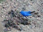 युवक के शव का ऊपर का हिस्सा मिला गायब, नदी में बाढ़ आने के बाद किनारे पर दिखी लाश; हत्या की आशंका|झारखंड,Jharkhand - Dainik Bhaskar