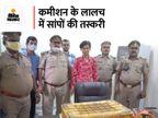 रेड सैंड बोआ प्रजाति के दोमुहे सापों की करते थे तस्करी, एड्स की दवा बनाने में होता है इनका इस्तेमाल, एक गिरफ्तार|लखनऊ,Lucknow - Money Bhaskar