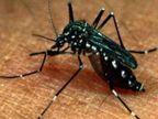 कोरोना फ्री झांसी पर डेंगू का अटैक मरीजों की संख्या हुई 9 ; सर्वे में 396 घरों में मिला लार्वा, जलजमाव बना बड़ा कारण झांसी,Jhansi - Money Bhaskar