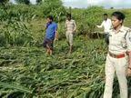 नाले से डेढ़ किलोमीटर दूर मिला ऑटो, चालक का शव ढूंढ रही पुलिस, SDRF की टीम भी कर रही सर्चिंग|छिंदवाड़ा,Chhindwara - Money Bhaskar