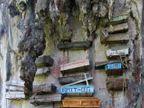 येथे आहे मृतदेहांना खडकांवर लटकवण्याची विचित्र प्रथा, जाणून घ्या याविषयी  - Divya Marathi