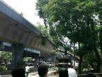 मुंबई, पुण्यासह राज्यात सर्वदूर पाऊस, दादरमध्ये झाड पडून 1 ठार, 2 जखमी|मुंबई,Mumbai - Divya Marathi