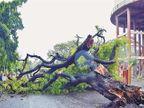महाराष्ट्र चिंब : उशिरा आगमन, पण विक्रमी बरसात; मुंबईत सर्वोच्च पाऊस|पुणे,Pune - Divya Marathi