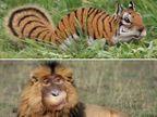 FUNNY ZOO: इथे आहे वाघासारखी खारूताई आणि माकडासारखा सिंह, पाहून डोके चक्रावेल  - Divya Marathi