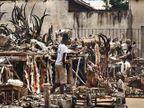 विचित्र बाजार: \'सेक्स पॉवर\' वाढवण्यासाठी येथे खरेदी केेले जाते माकडाचे वाळलेले शीर| - Divya Marathi