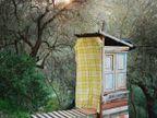 शहरी जीवन सोडून जंगलात राहताय हे लोक, फोटोग्राफरने दाखवली अशी LIFE| - Divya Marathi