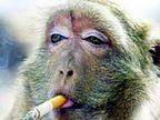 FUNNY: NO SMOKING चा बाप, पाहा धमाकेदार कलेक्शन आणि व्हा लोटपोट  - Divya Marathi
