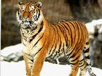FUNNY: \'मित्रा दात घासत जा ना रोज\',  प्राण्यांचे असे फोटो जे तुम्हाला खळखळून हसवतील| - Divya Marathi